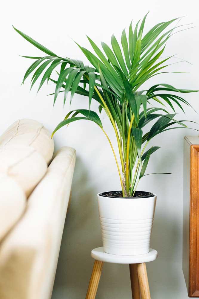Vaso ainda pequeno de Camedórea elegante decorando a sala de estar do apartamento