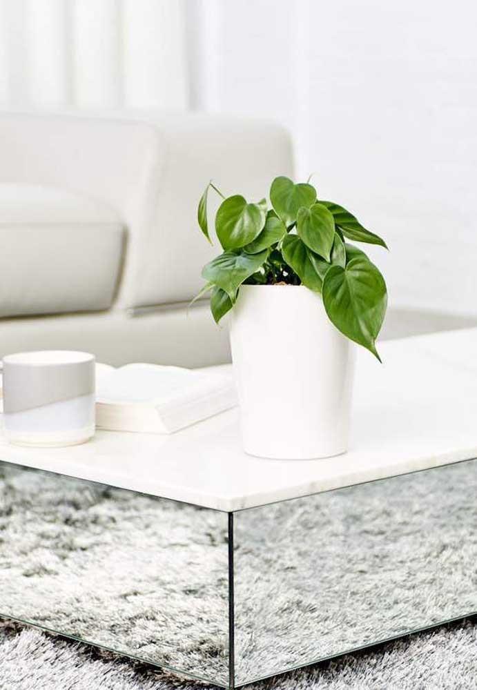 Vasinho discreto e em crescimento de Filodendro para a sala de estar