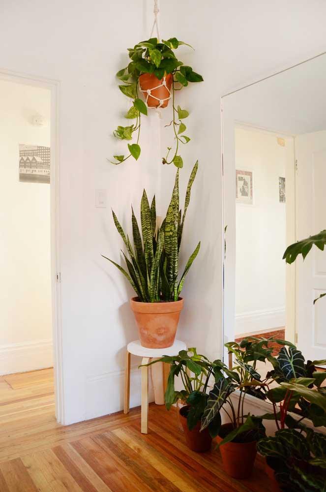 Uma pequena floresta urbana nesse apartamento; aqui, o Filodendro é cultivado de modo suspenso