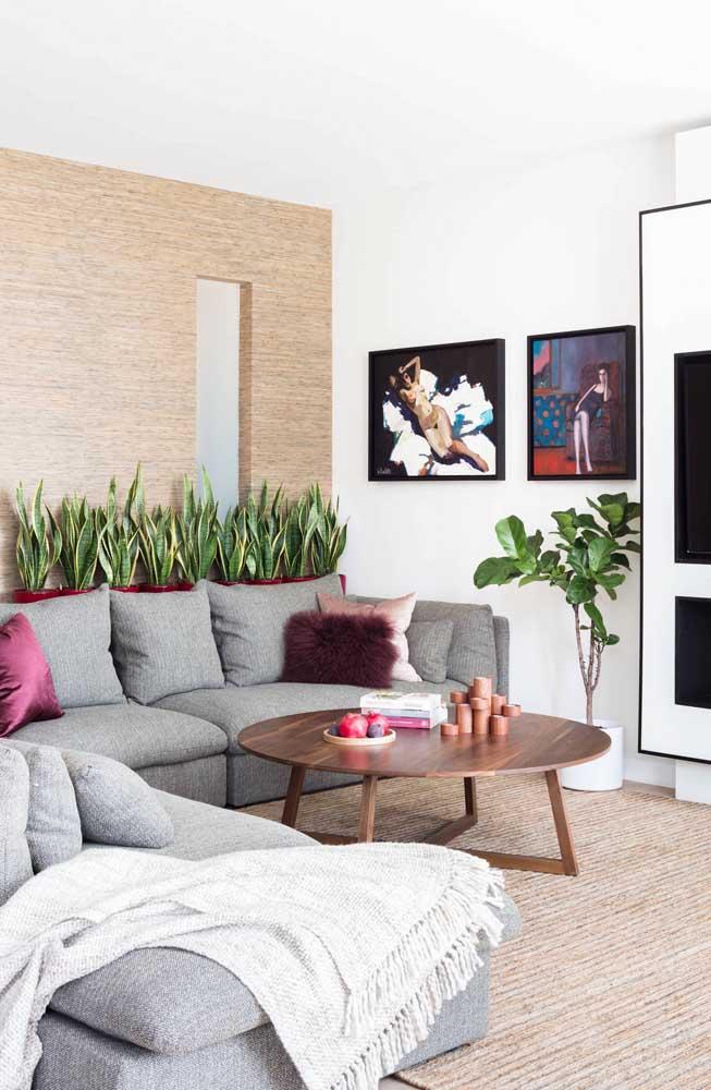 Canteiro com Lanças de São Jorge atrás do sofá; uma ótima ideia para inserir a planta no ambiente