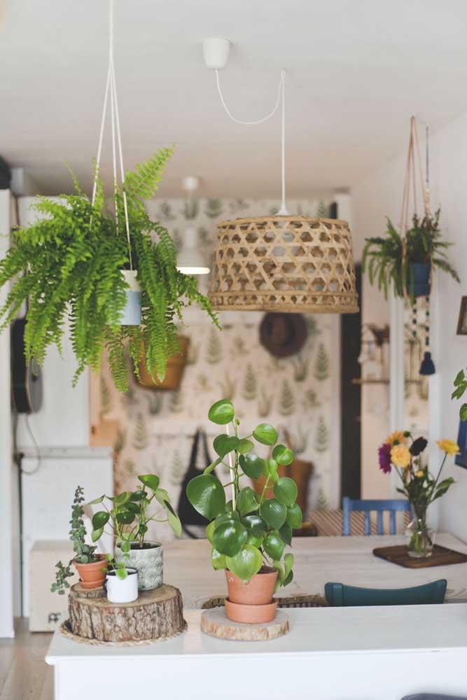 Peperômia na decoração da cozinha junto de outras espécies