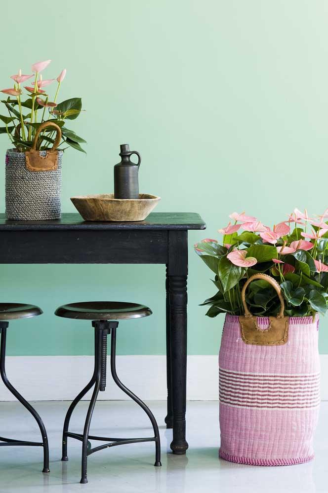 O cesto de fibra deixou os vasos de antúrios ainda mais bonitos