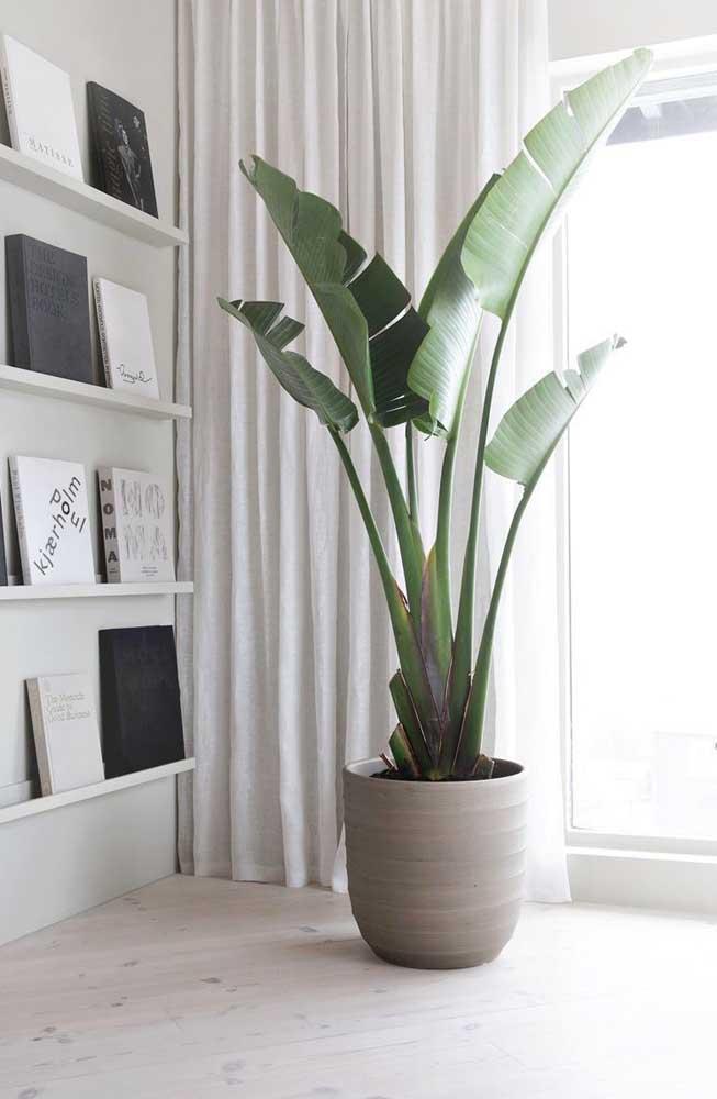 Na sala de estar, a Pacová pode se revelar uma linda opção paisagística