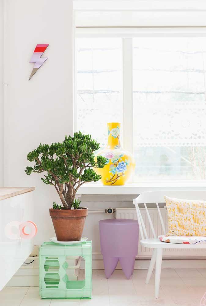 O melhor lugar para cultivar a Jade em apartamentos é perto da janela