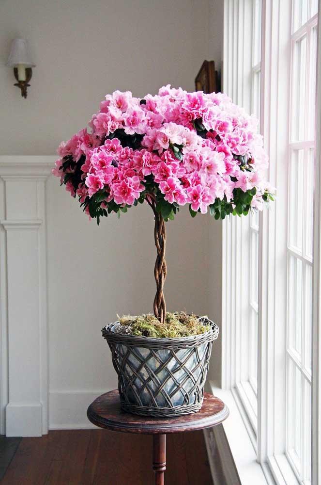 Um vaso deslumbrante de azaleia para encher a casa de cor e vida