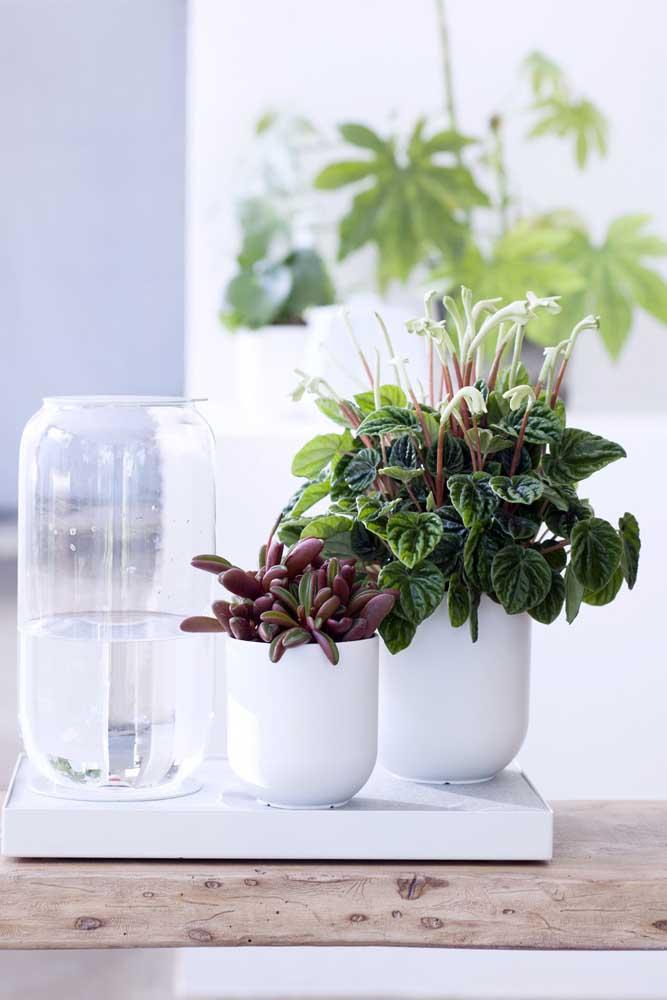 Escolha um vaso bem bonito para expor suas suculentas