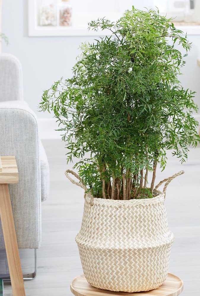 Um bom lugar para cultivar a árvore da felicidade é na sala de estar