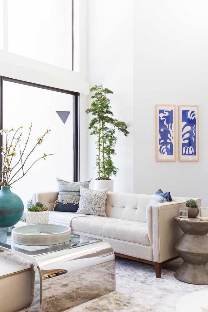 Árvore da felicidade pertinho da janela: um dos melhores lugares da casa para a planta