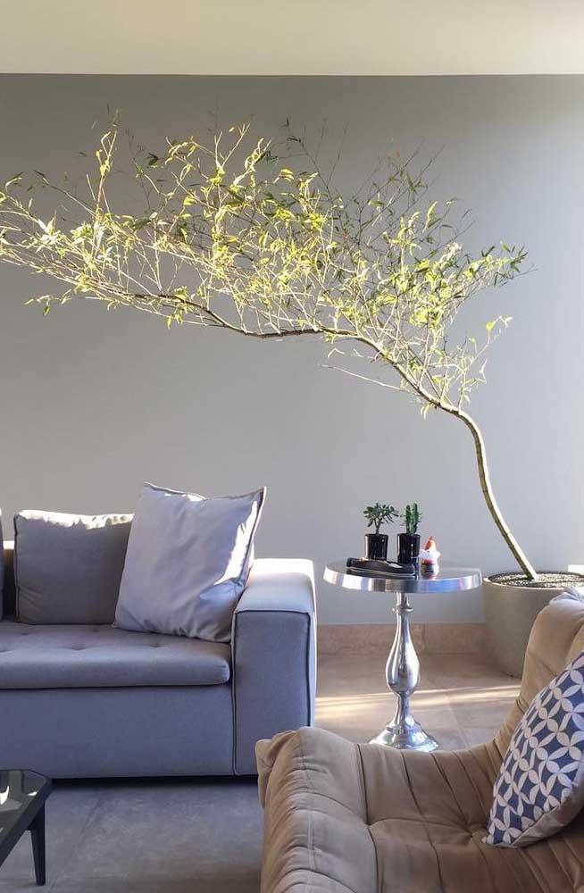 Veja que lindo efeito visual o Bambu Mossô provoca no ambiente