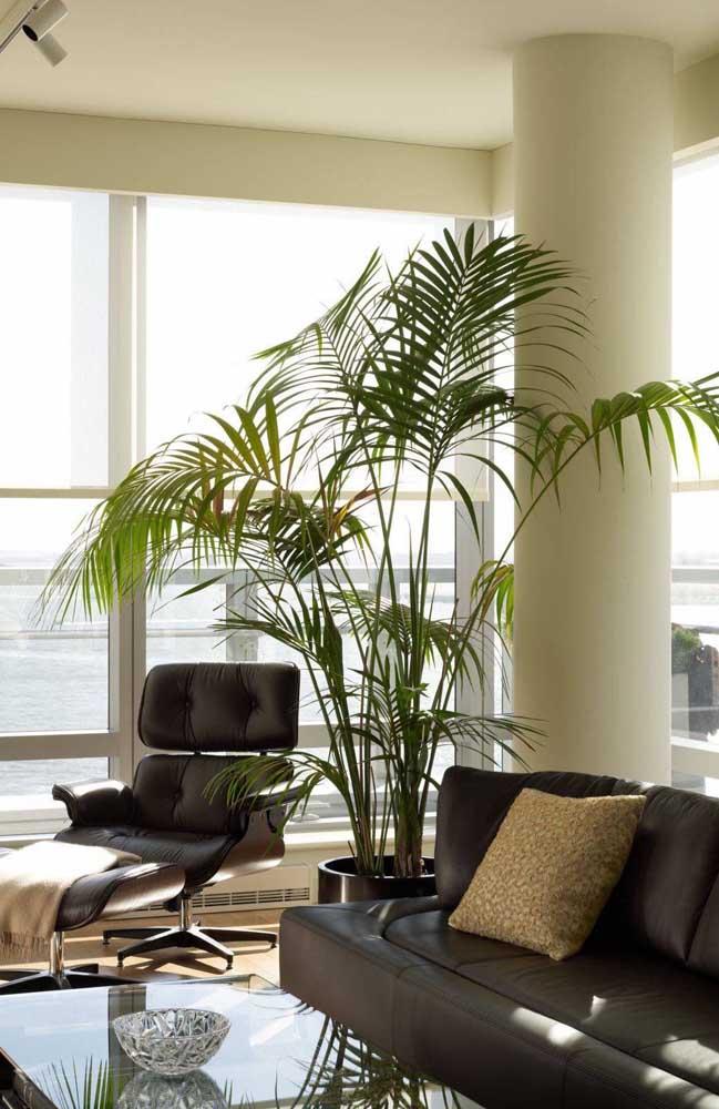 Palmeira Ráfia complementando a decoração sóbria e elegante dessa sala de estar de apartamento