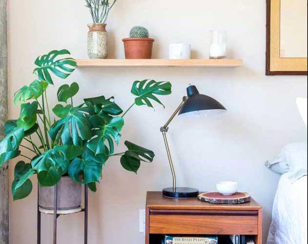 Plantas para apartamento: tipos e espécies mais adequadas