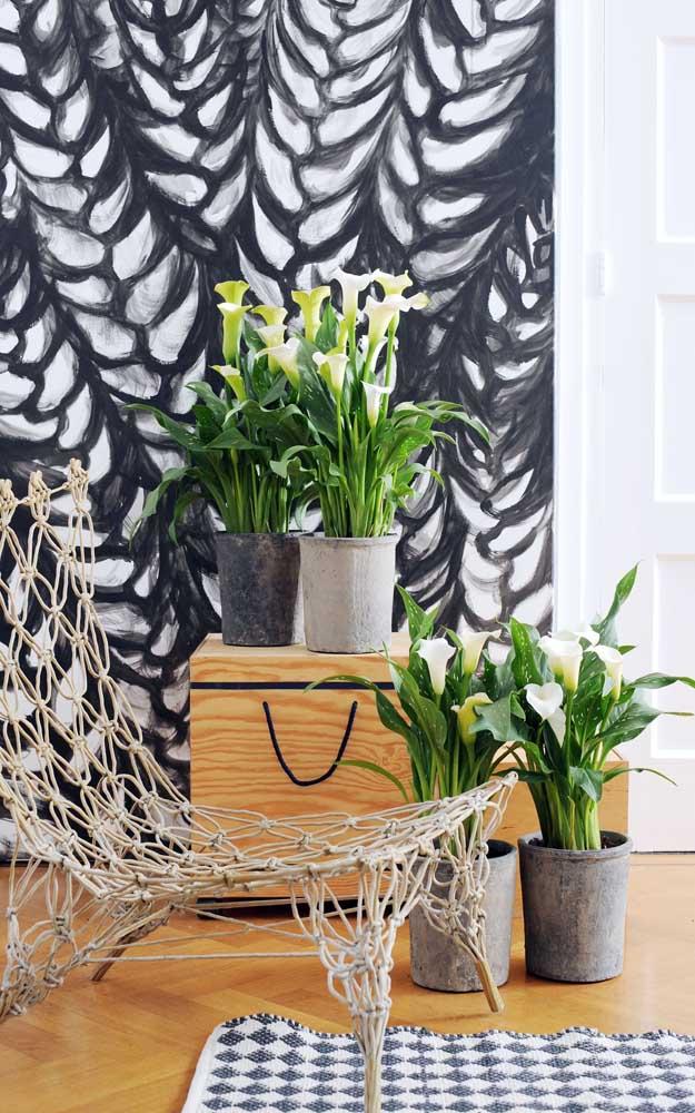 Uma das flores mais cobiçadas pelas noivas, o Copo de Leite, possui uma estrutura longilínea muito elegante, ideal para compor decorações nobres e sofisticadas