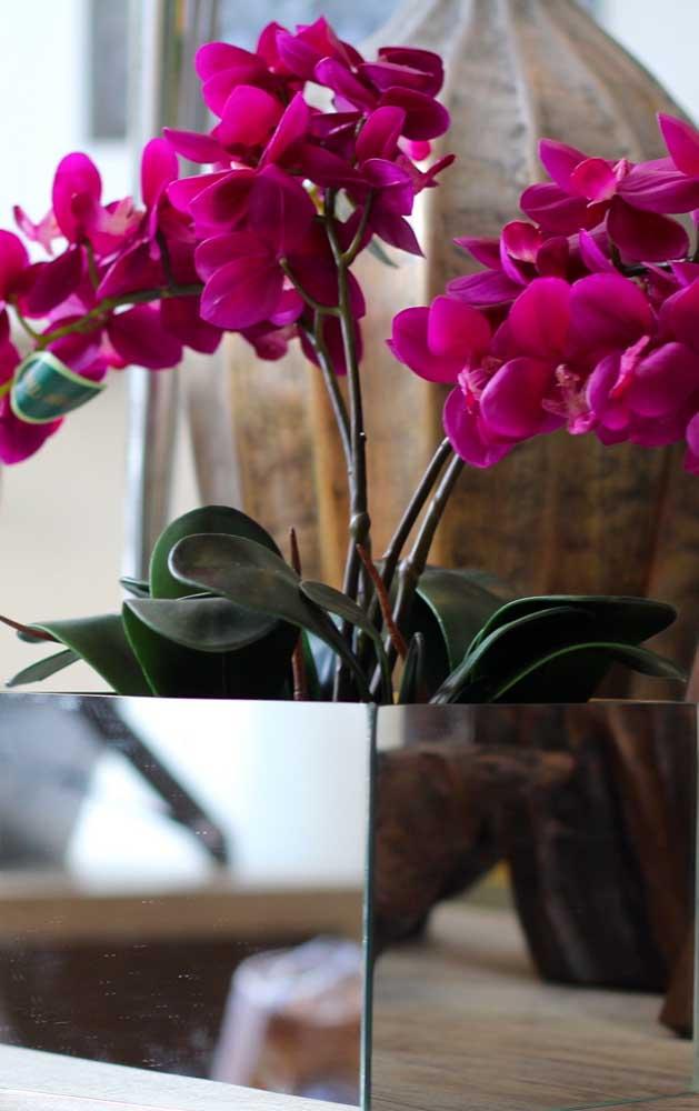 A flor Flox brinda a todos com sua beleza por quase seis meses ininterruptos, tempo que dura sua floração