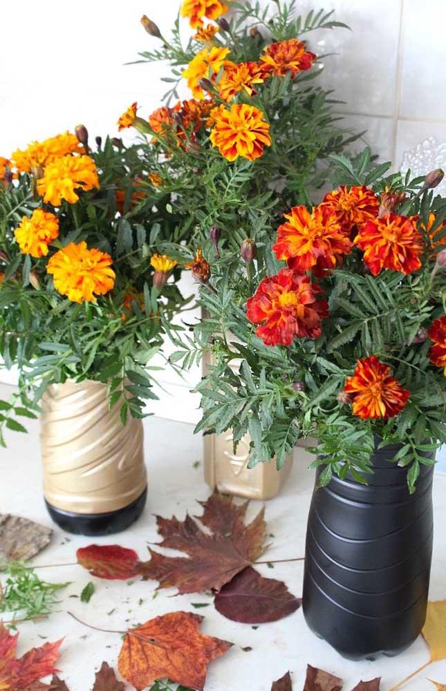 A bela flor da Gailárdia se destaca pelo tom vermelho alaranjado de suas pétalas; a espécie é parente muito próxima dos girassóis
