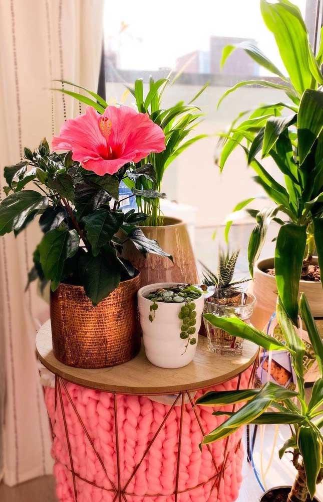 Olha aí mais uma flor linda e que ainda possui propriedades terapêuticas; a Hibisco é merecedora de um espaço na sua casa e na sua decoração