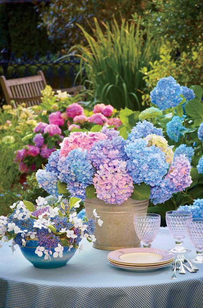As pequeninas flores em formato de buquê da Hortênsia a colocam no ranking das flores mais lindas que existem; uma característica interessante dessa espécie é que as flores mudam de cor de acordo com a iluminação e com o tipo de solo onde estão plantadas