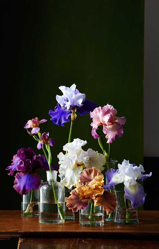 A flor Iris, ou flor de Lis, é magnifica! As cores, a forma, tudo nela é encantador