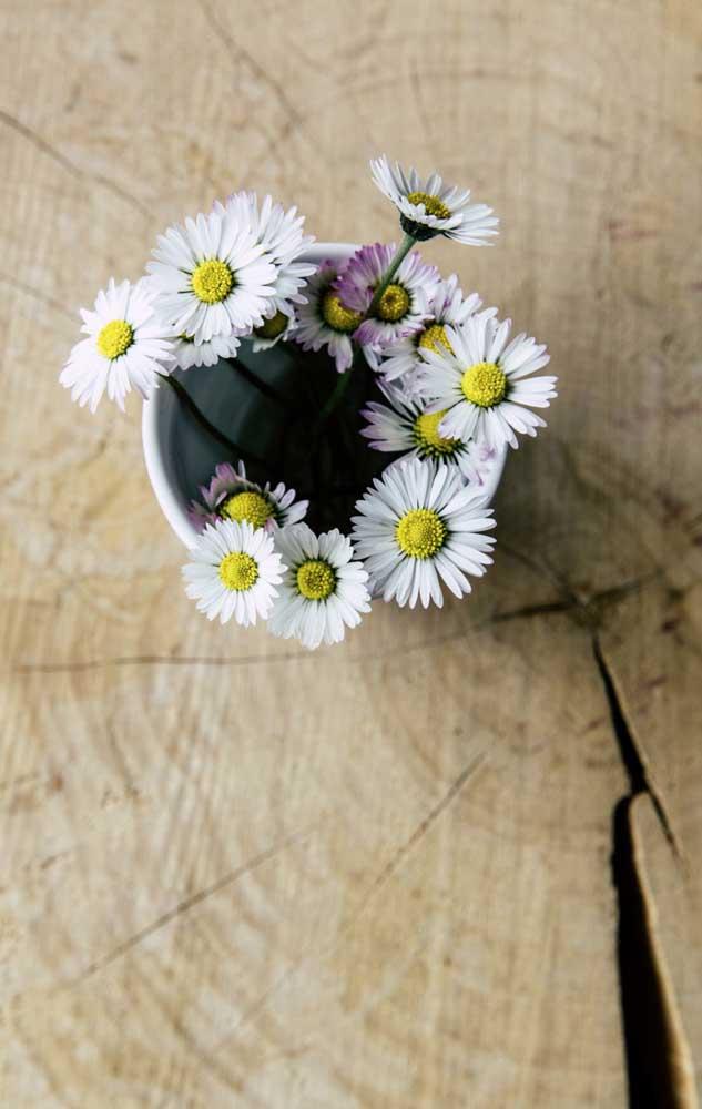 Quem nunca se rendeu aos encantos de uma simples e bela Margarida? Essa florzinha tão popular integra a lista das flores mais lindas sem dúvida nenhuma