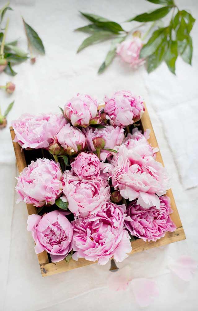 Outra flor que faz sucesso entre as noivas: a Peônia. E não é por menos, a espécie delicada possui cores de tonalidades variadas em um formato único