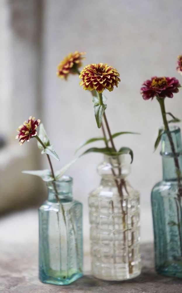 Quer borboletas no seu jardim? Então plante zínias, essa flor linda e exuberante atrai borboletas como nenhuma outra
