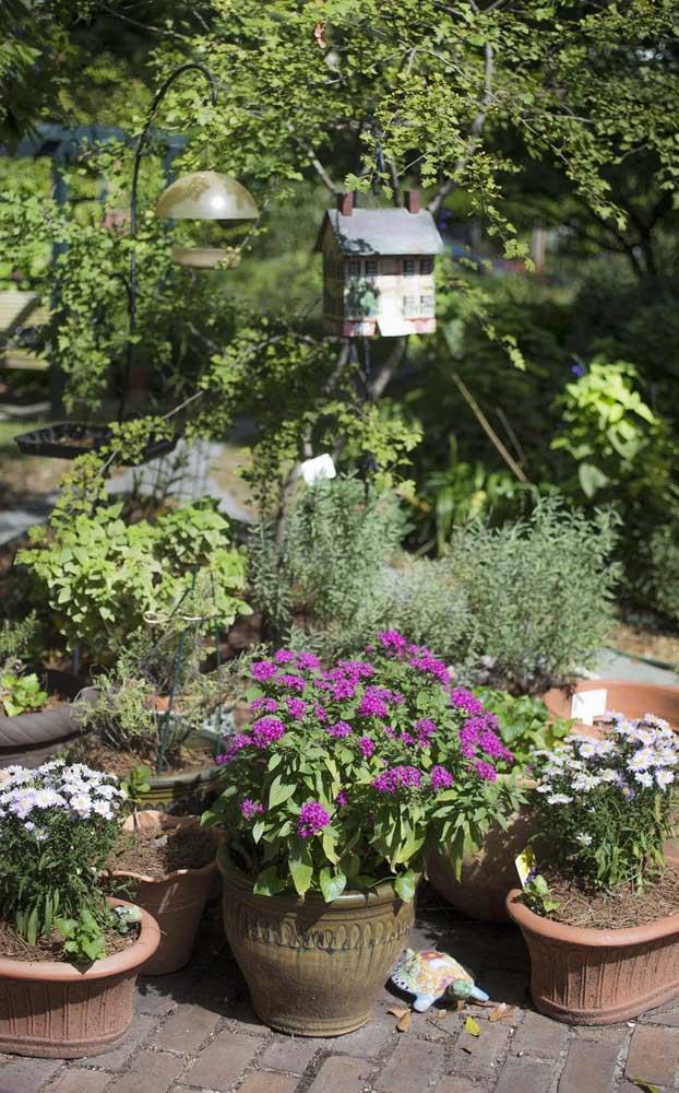 Para quem tem pouco espaço em casa ou mora em apartamento pode optar por cultivar o Manacá da Serra Anão em vaso