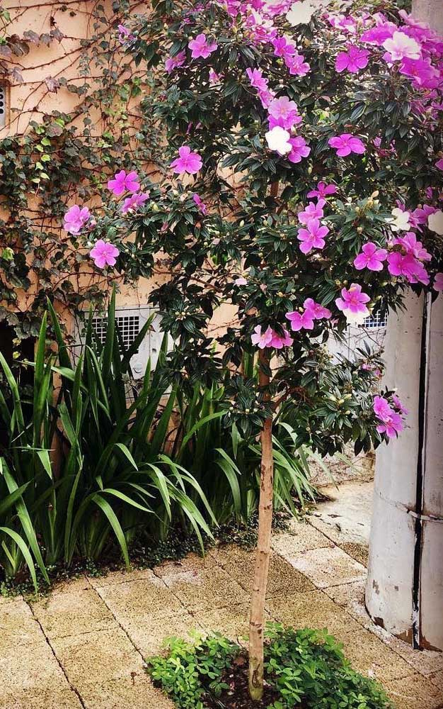 Um pequeno cantinho na área externa da casa já foi suficiente para cultivar o Manacá da Serra