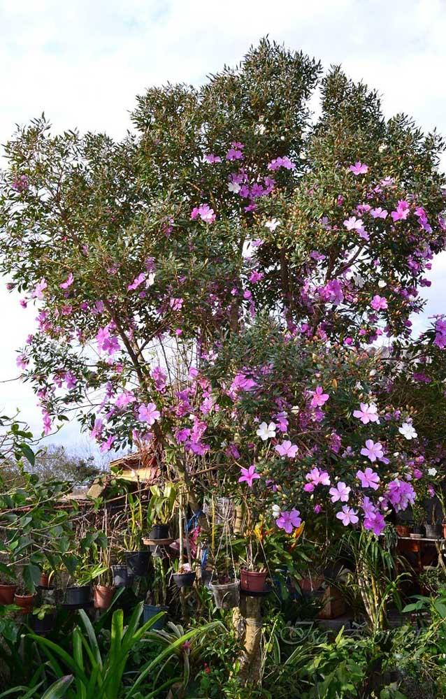 Essa casa em meio à natureza apostou na beleza exuberante do Manacá da Serra