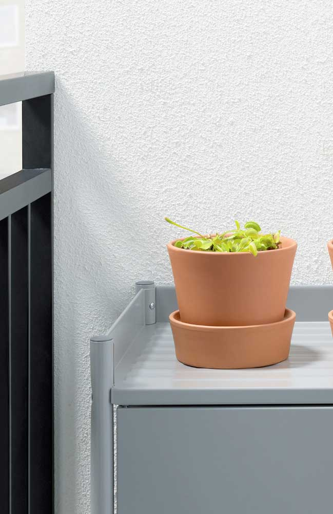 Áreas externas e locais perto de janelas são os ambientes ideais para cultivo de plantas carnívoras