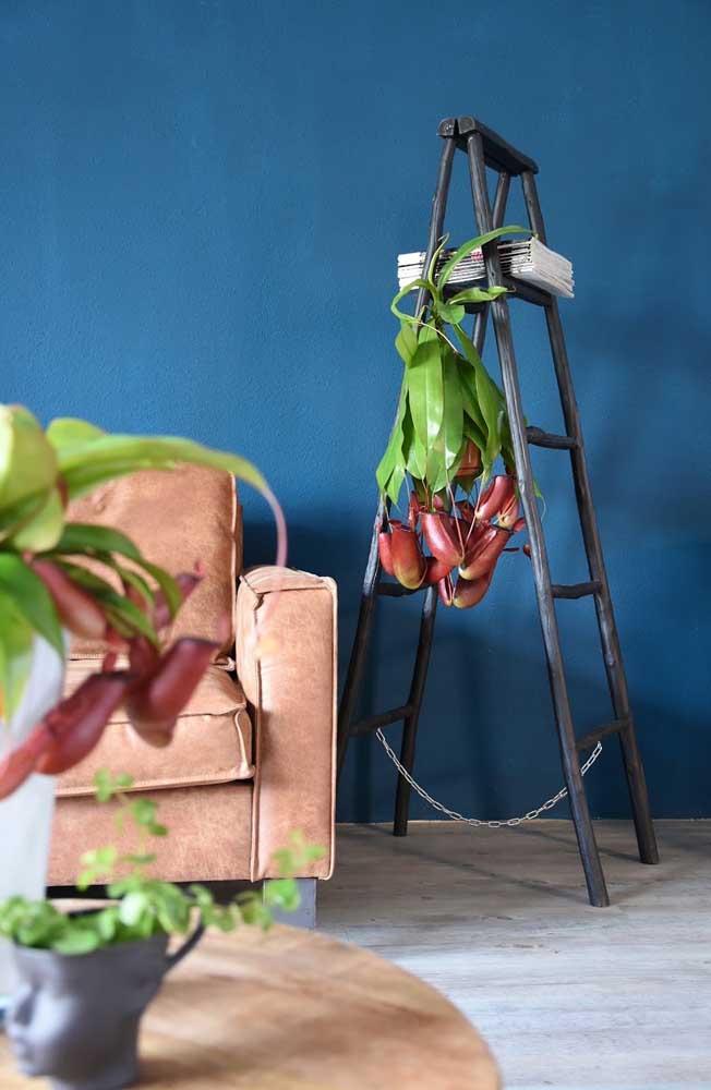 De tamanho maior, essa Nepenthes foi usada para decorar a sala de estar