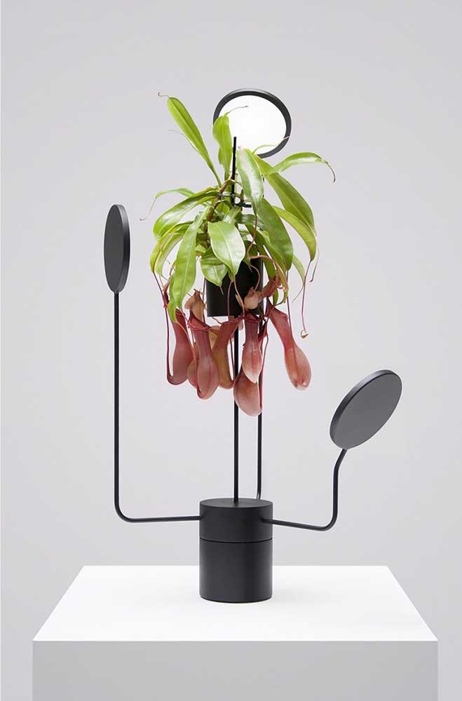 Um arranjo moderno para abrigar a exótica planta carnívora Nepenthes