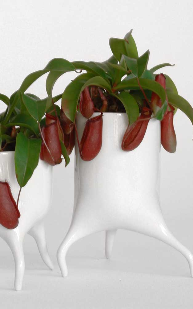 Para uma planta peculiar, um vaso no mesmo estilo