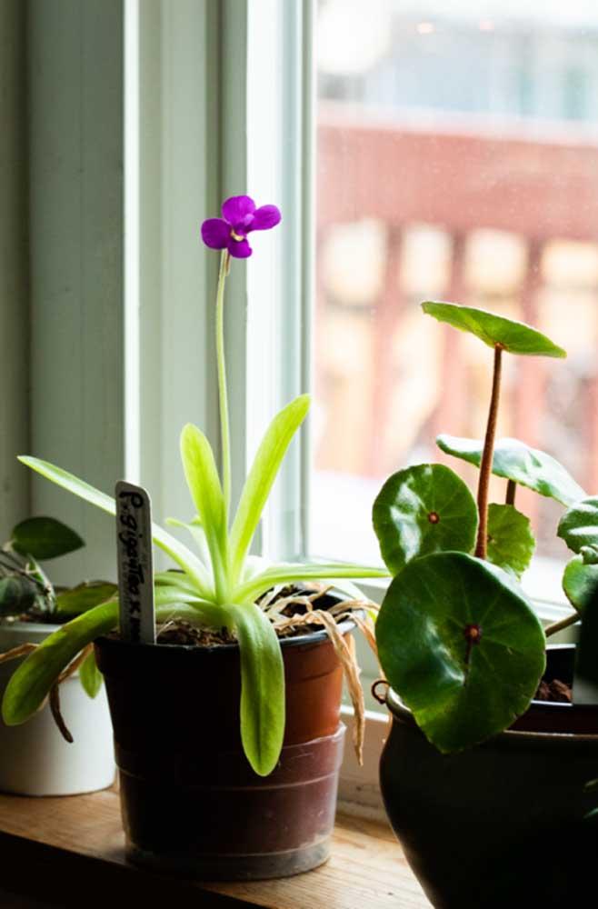 Na janela, aproveitando toda a luz natural!