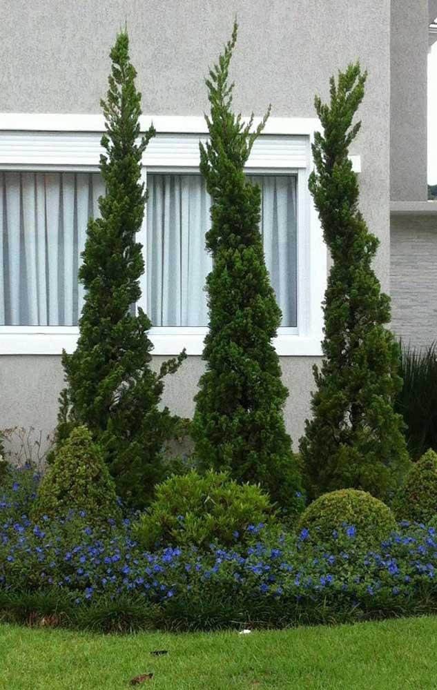 Fachada com jardim de Kaizukas, buchinhas e um gramado verde super bem cuidado