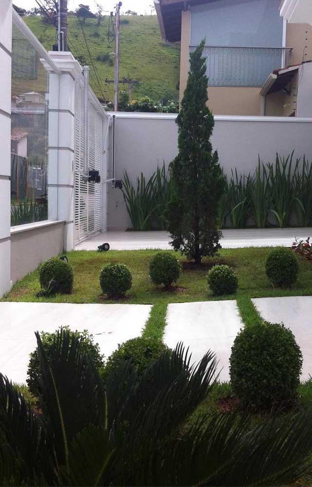 Jardim simples com Kaizuka, literalmente, no centro das atenções
