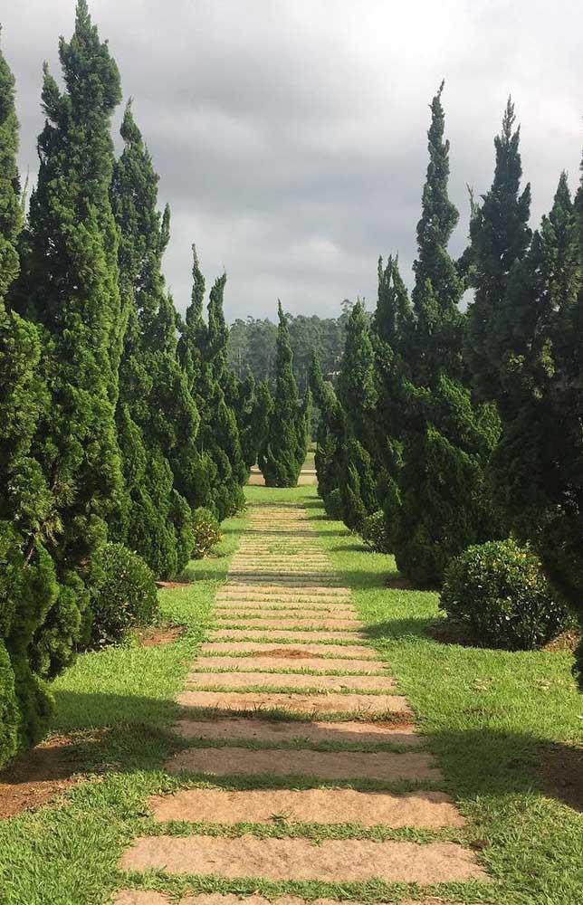 Jardim de estilo europeu com caminho de Kaizukas, um charme e tanto!