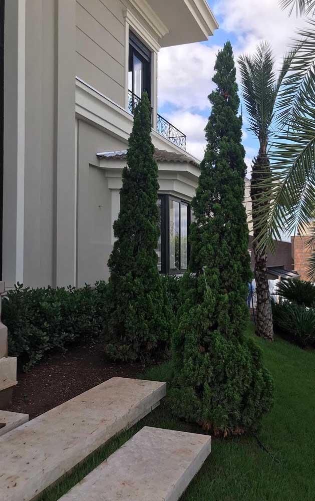 Sugestão de plantio da Kaizuka: forme um caminho na entrada da casa com duas ou mais árvores
