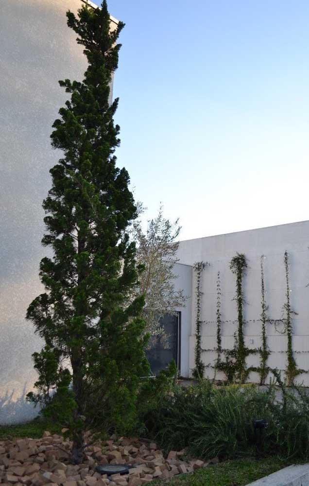 Uma Kaizuka monumental no jardim de casa para não passar despercebida