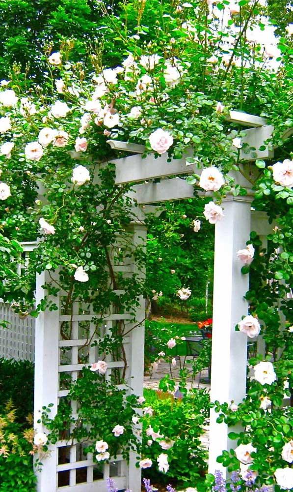 Madeira branca e rosas trepadeiras: uma linda e delicada combinação para o caramanchão