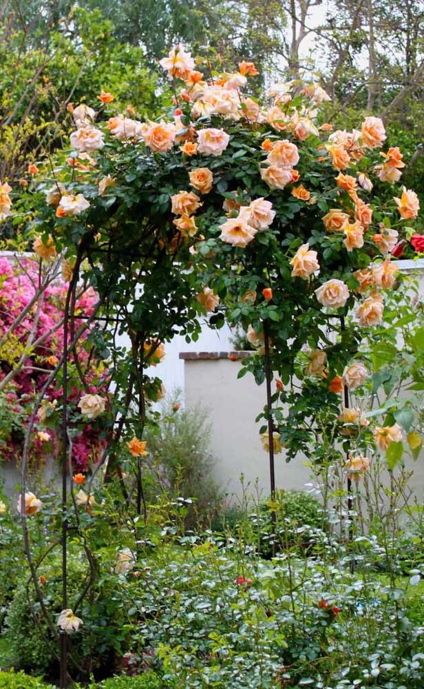As rosas laranjas encontram o apoio perfeito para crescer