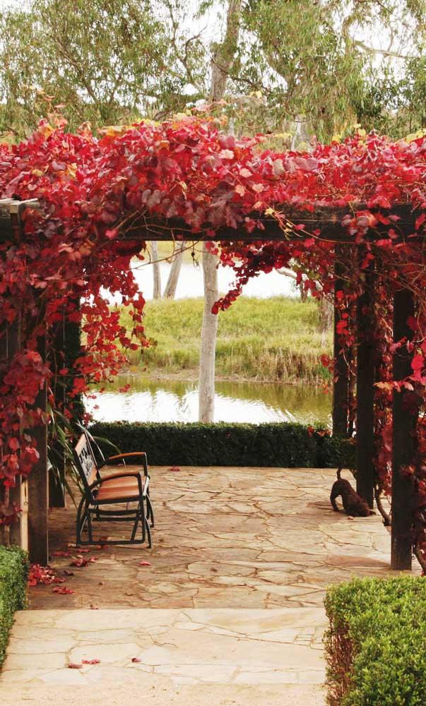 As folhas vermelhas trazem uma beleza sem igual para esse caramanchão na beira do lago