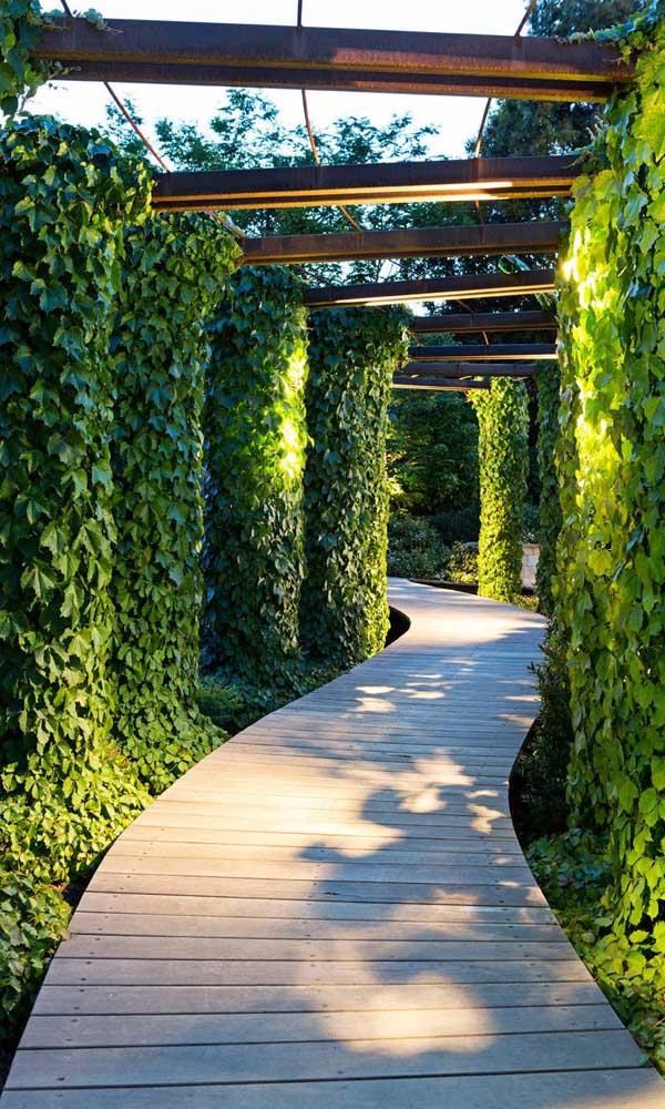 O caminho feito com piso de madeira acompanha a estrutura do caramanchão que mantem apenas as laterais com plantas