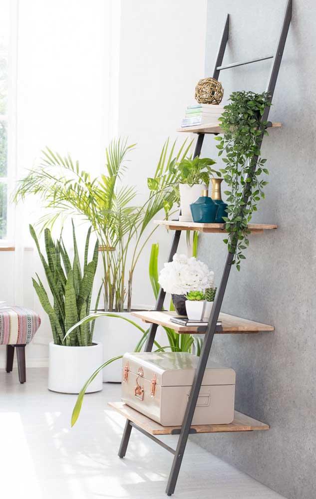 "As plantas pendentes revelam toda sua beleza sobre os ""degraus"" da estante escada"