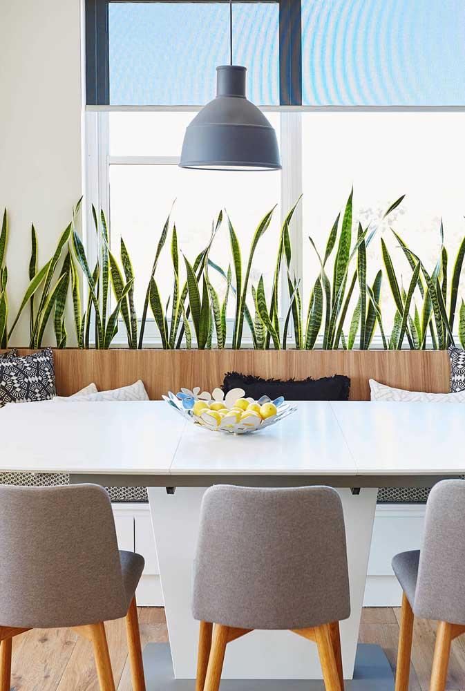Suporte para plantas feito sob medida para acompanhar a parede atrás da mesa de jantar