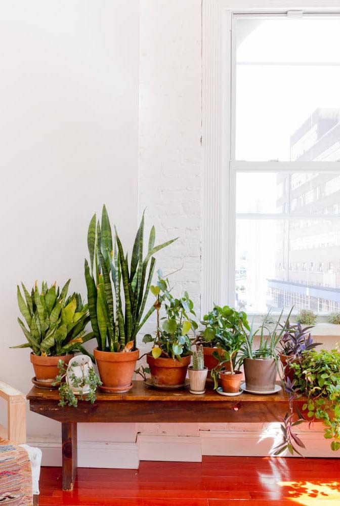 A simplicidade de um banco de madeira usado como suporte para plantas: linda ideia!