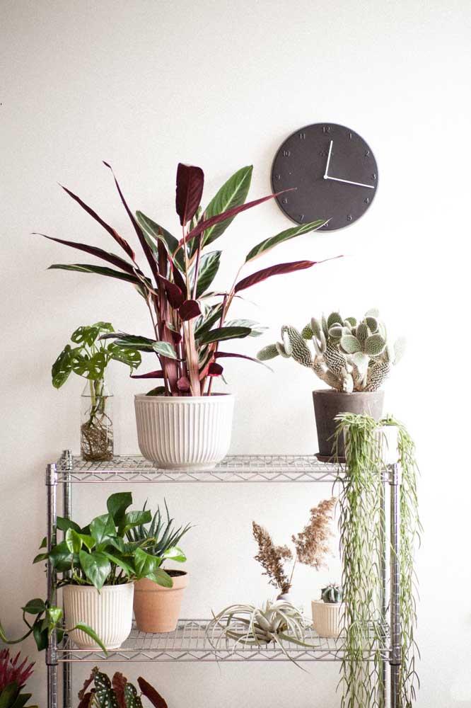 Suporte para plantas de metal: todas as suas plantinhas em um lugar só