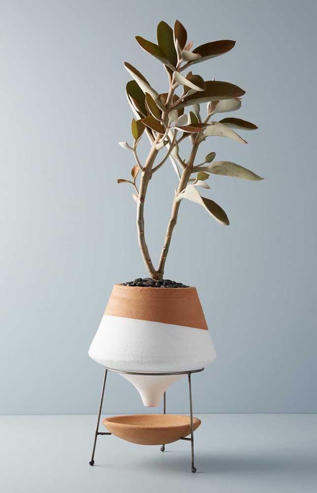 Abacateiro anão plantado em vaso para decorar a casa