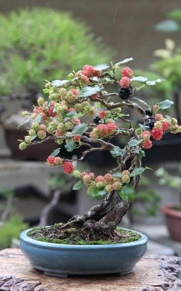 A amoreira é uma espécie muito comum de ser vista em bonsais
