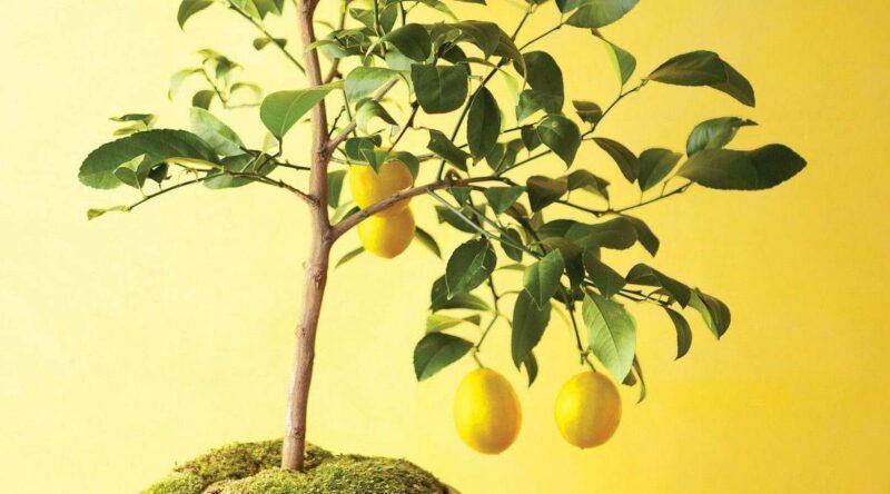 Árvores frutíferas: espécies, cuidados, dicas e exemplos com fotos