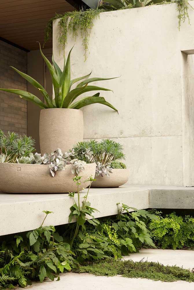 Jardim em vasos: solução para espaços pequenos