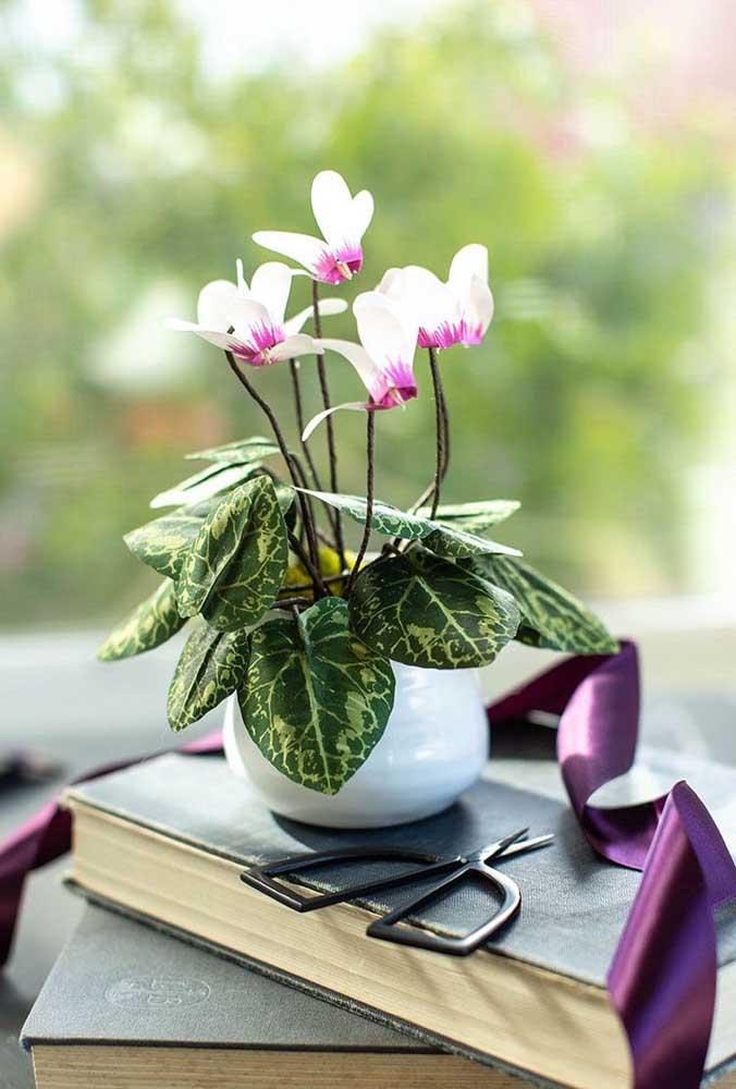 Um delicado vaso de cerâmica com cíclame. Qualquer decoração se valoriza na presença da flor